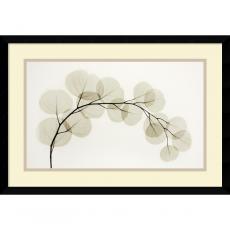 Flowers & Plants - Albert Koetsier Eucalyptus II Office Art