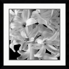 Brigitte Hoy Hyacinth Office Art