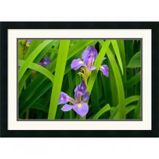 Andy Magee Purple Iris Office Art