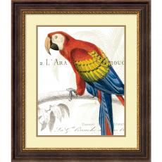 Wild Apple Portfolio Parrot Botanique II Office Art