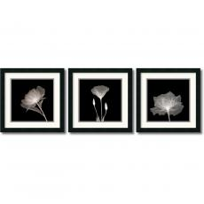 Translucent Floral - set of 3 Office Art