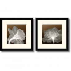 Sheer Elegance - set of 2 Office Art