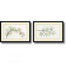 Albert Koetsier Eucalyptus and Japanese Maple - set of 2 Office Art