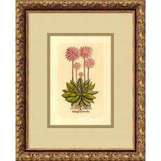 Plantago (Rosea Exotica) Office Art