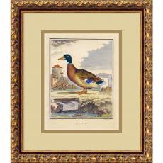 The Duck (Le Canard) Office Art