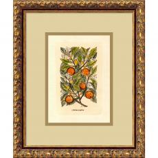 Flowers & Plants - Orange (Malus Arantia) Office Art