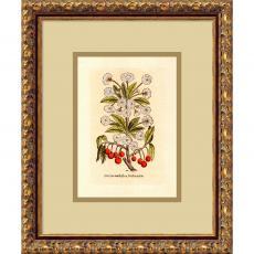 Cherry (Cerasus Multiflora) Office Art