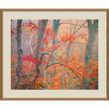 William Neill Maple Trees in Fog Near Eagle Lake, Acadia National Park, Maine, 1990 Office Art