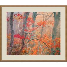 William Neill Maple Trees in Fog Near Eagle Lake, Acadia National Park, Maine, 1990 Office Art