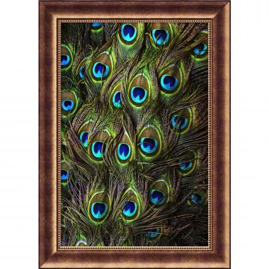 Peacock Splendor I Office Art