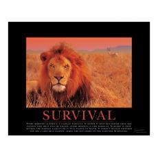Motivational Posters - Survival Lion Motivational Poster