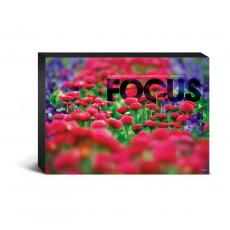 Entire Collection - Focus Flowers Desktop Canvas