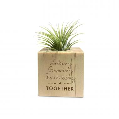 Working Growing Succeeding Wooden Air Plant