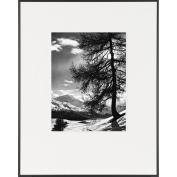 Tree on Alpine Slope-LIFE Magazine Fine Art Collection
