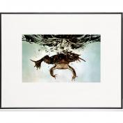 Frog Submerging-LIFE Magazine Fine Art Collection