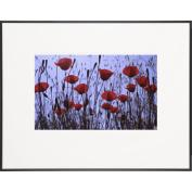 Red Poppies-LIFE Magazine Fine Art Collection