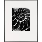 Chambered Nautilus Shell-LIFE Magazine Fine Art Collection