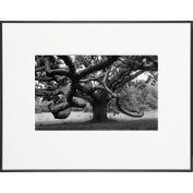 Giant Oak Tree on Martha's Vineyard-LIFE Magazine Fine Art Collection