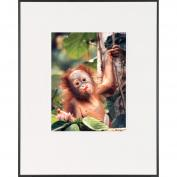 Baby Orangutan-Life Magazine Fine Art Collection