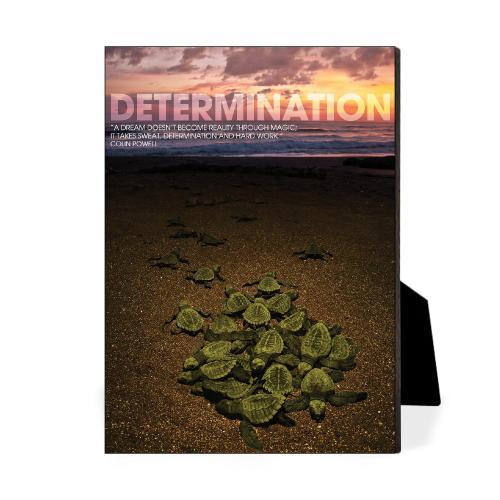 Determination Turtles Desktop Print