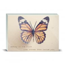 Color & Texture - Butterfly Beauty Desktop Print