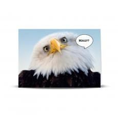 Really Eagle 25-Pack Greeting Cards