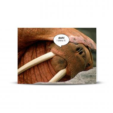 Doh Walrus 25-Pack Greeting Cards